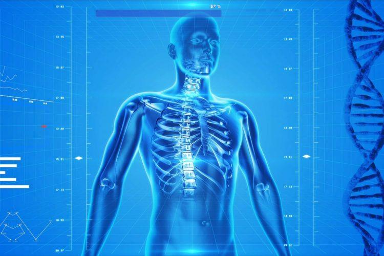 https://integrativewellnesscenter.us/wp-content/uploads/2018/09/human-skeleton-163715_1280-750x500.jpg